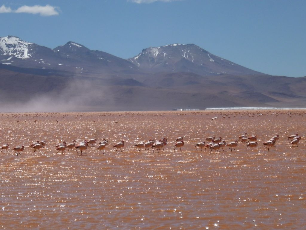Groepsreis Peru Bolivia Chile