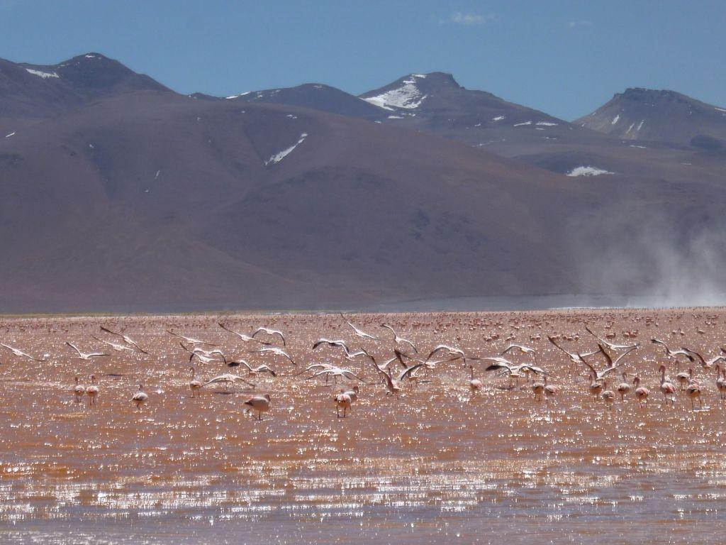 Surrealistische Bolivia reis, Laguna Colorada
