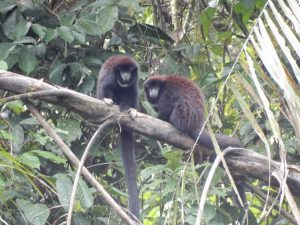 Siona Cuyabeno tour monkeys